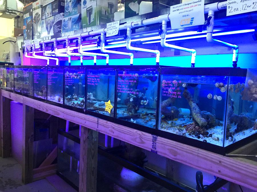 Cte aquatics invertebrates for Fish store baltimore
