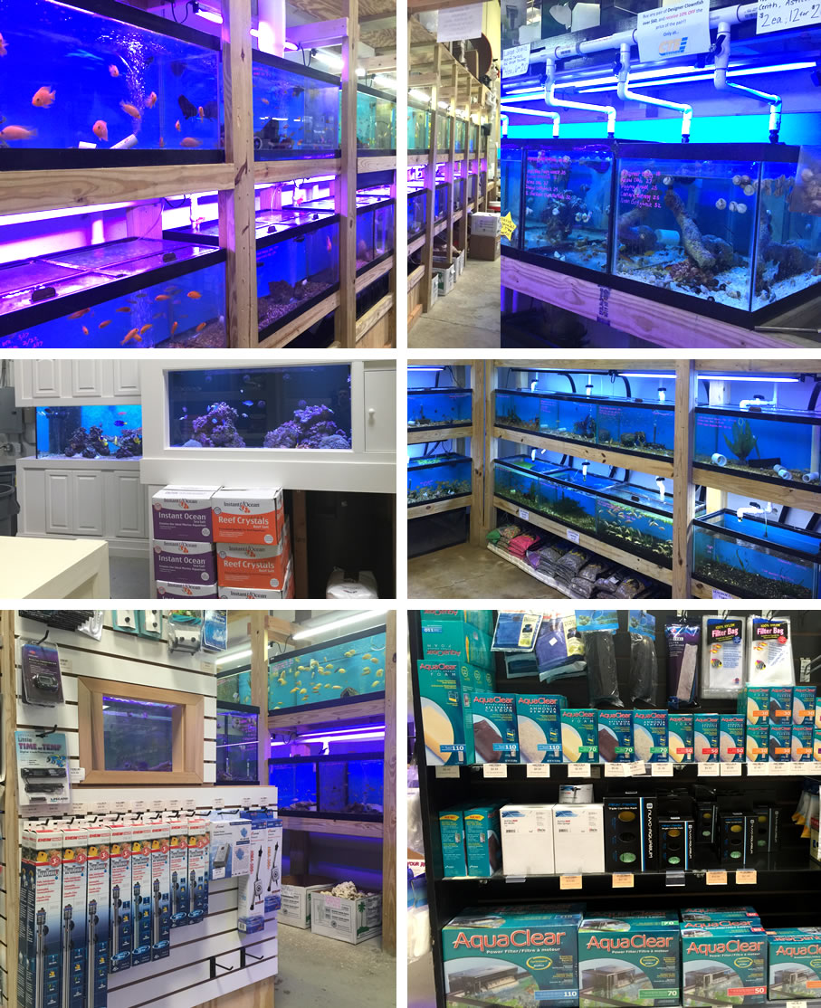 cte aquatics a baltimore tropical fish store marine