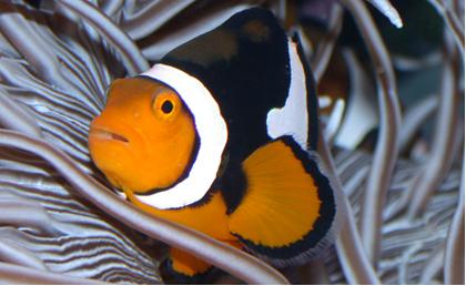 Cte aquatics saltwater fish for Fish store baltimore